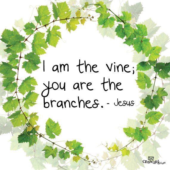 I Am – The True Vine